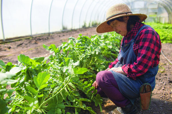 "Yoshiko Unno digs for daikon radish at Umi Nami Farm in Victoria, B.C. on April 20, 2016. ""Twenty years ago, Japanese vegetables were not so popular,"" Unno said. ""But right now, everybody wants them. Japanese food and cuisine is a lot more popular."""