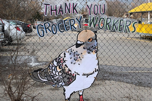 Giant pigeons carry messages of love and gratitude in Toronto