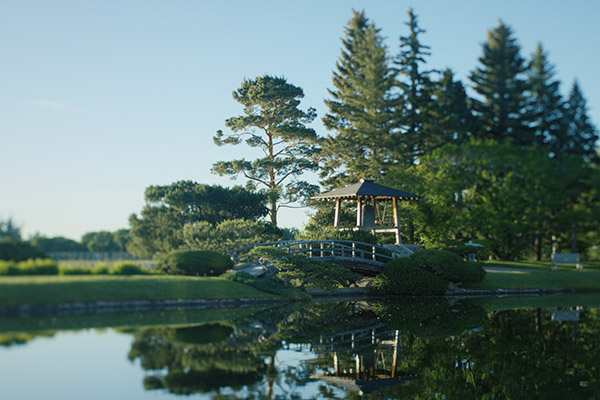 Exploring the sprawling and complex history of Japanese Canadian gardens